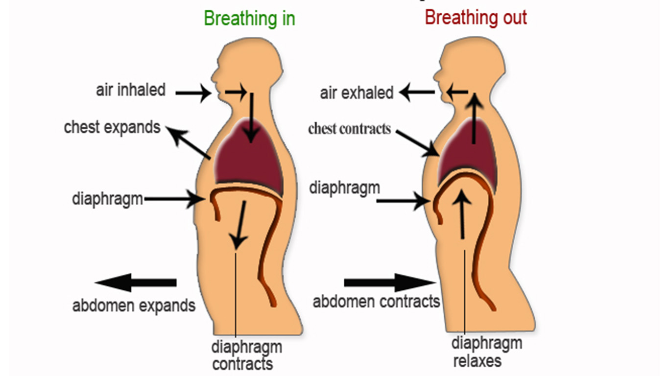 Diaphragmatic breathing exercises to cope with stress and anxiety ccuart Images
