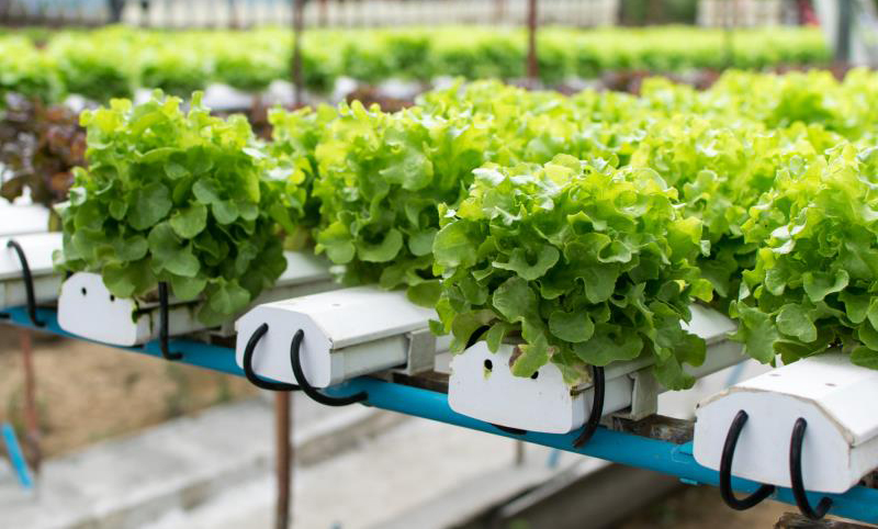 Hydroponic Gardening Is The Term That Means A Special Technique Of Growing Plants Indoors Without Soil It Has Acquired Certain Amount Popularity In