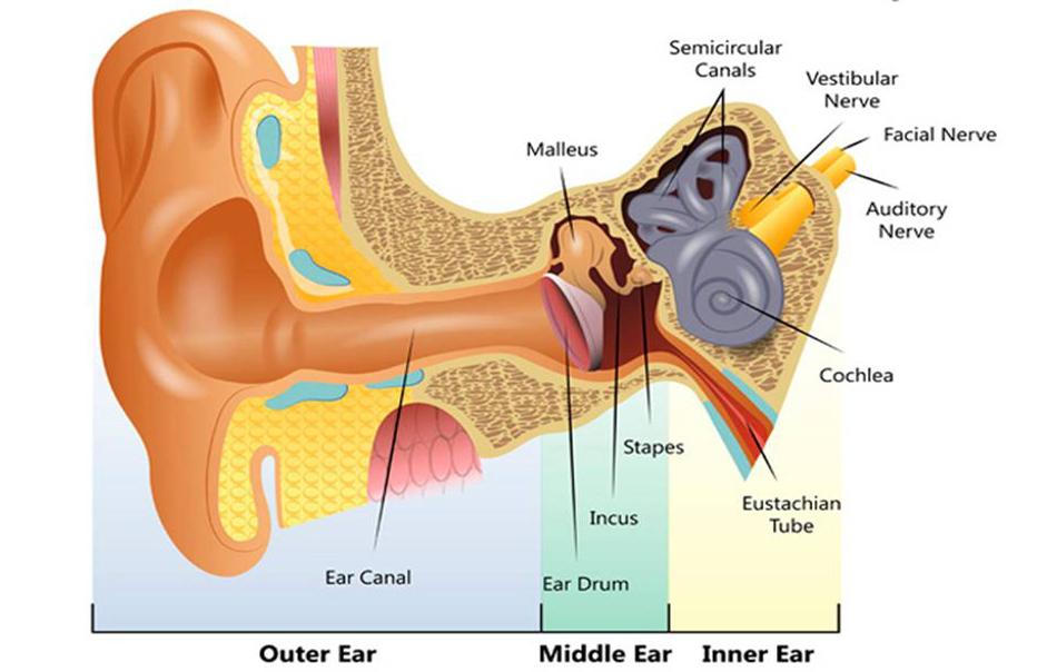 nerve deafness or sensorineural hearing loss. Black Bedroom Furniture Sets. Home Design Ideas